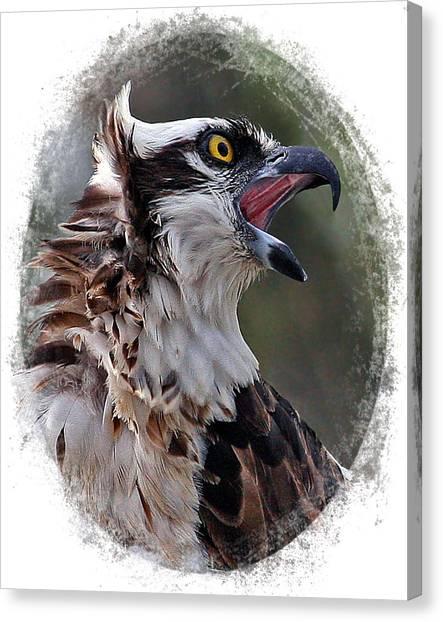 Calling Osprey Canvas Print
