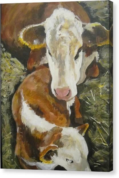 Calm Calf Canvas Print
