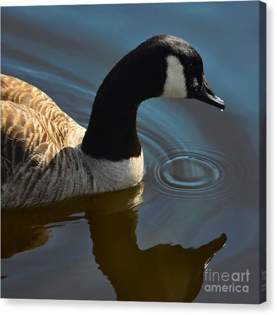 Calm Reflection Canvas Print
