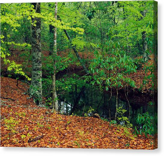 Fallen Leaf Canvas Print - Calm Stream Through Beech And Magnolia by Panoramic Images
