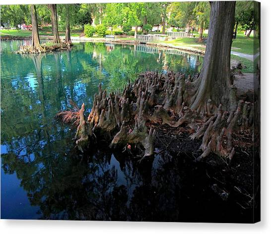 Oklahoma State University Canvas Print - Calm Water And Cypress Knees by Buck Buchanan