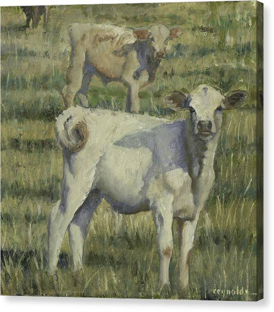 Calves In The Pasture Canvas Print