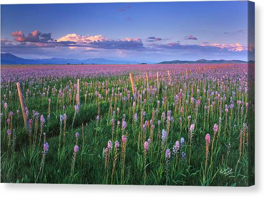 Prairie Sunrises Canvas Print - Camas Prairie by Leland D Howard
