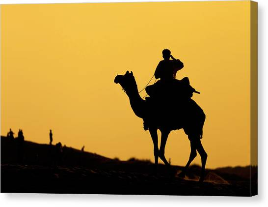 Camel At Jaisalmer, India Canvas Print