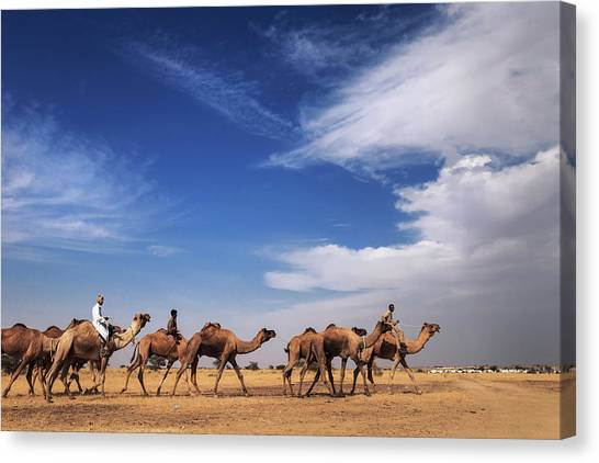 Camel Raiders, Jaisalmer, India Canvas Print