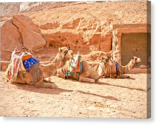 Arabian Desert Canvas Print - Camel Taxis  by Roy Pedersen