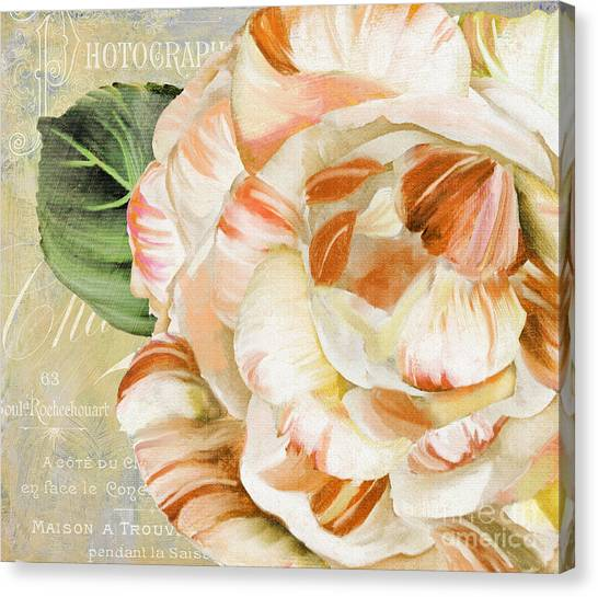 Camellias Canvas Print - Camellia II by Mindy Sommers
