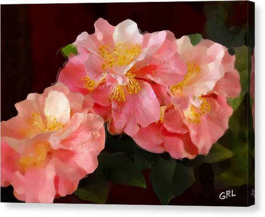 Camellias 1cmods1b Digital Painting Gulf Coast Florida Canvas Print