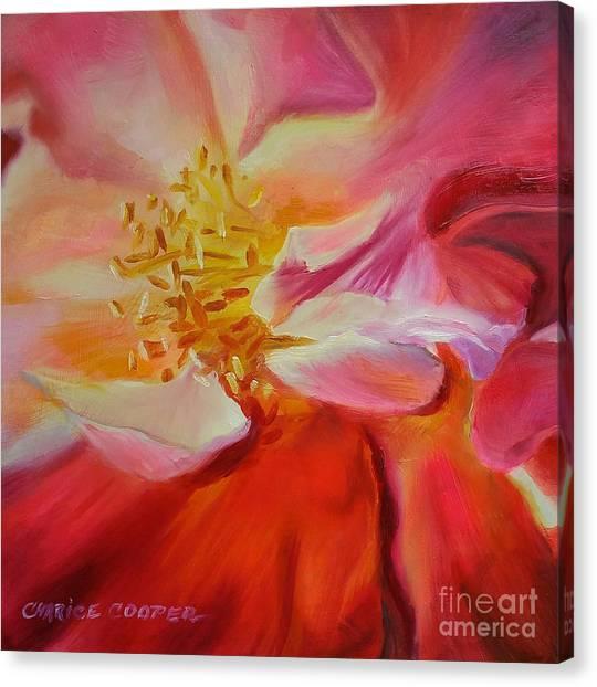 Camellia's Blush Canvas Print