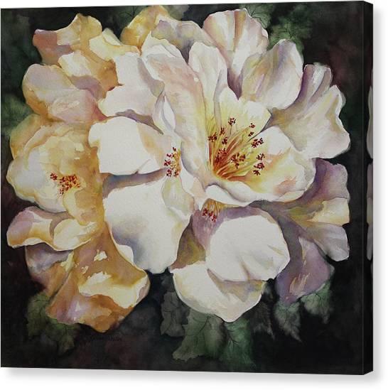 Camellias Golden Glow Canvas Print