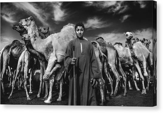 Egyptian Canvas Print - Camels Gaurdian by Mohamed Safwat Abonour