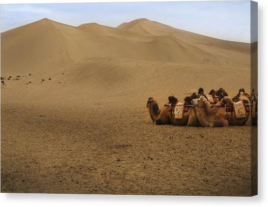 Camels Of The Silk Route Canvas Print