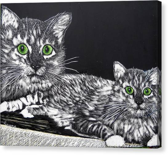 Main Coons Canvas Print - Cameo by Sandy Hemmer