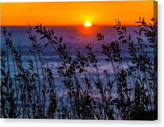 Orange Tree Canvas Print - Calmness At Sunset by Garry Gay