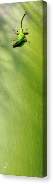 Green Camo Canvas Print - Camo by Ed Smith