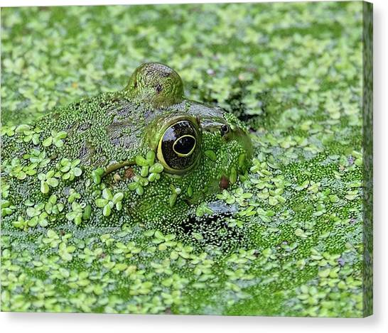 Camo Frog Canvas Print