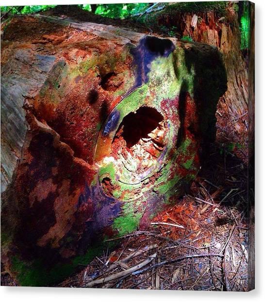 Green Camo Canvas Print - Camo Log  by Shawnna Rae