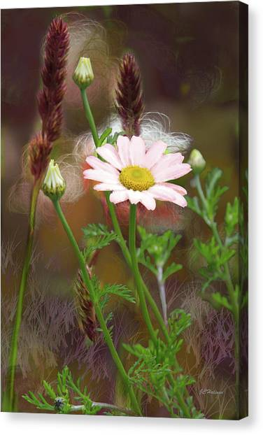 Camomile And Grass Canvas Print by Joe Halinar