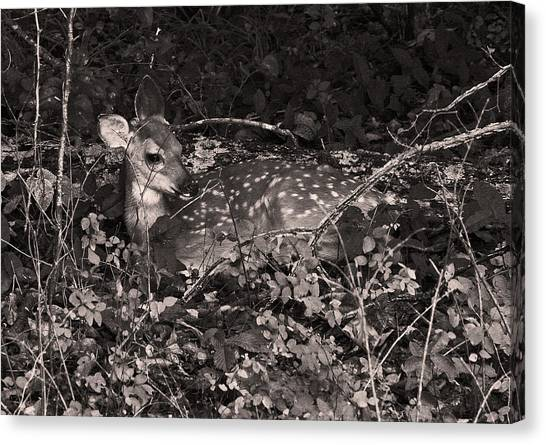 Mammoth Cave Canvas Print - Camouflaged Fawn by Brian M Lumley