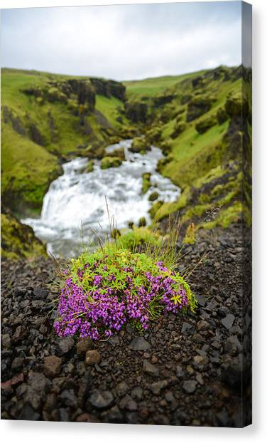 Eyjafjallajokull Canvas Print - Campion On The Fimmvorduhals by Alex Blondeau