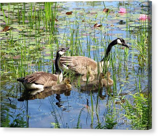 Canvas Print featuring the photograph Canada Geese Family On Lily Pond by Rose Santuci-Sofranko