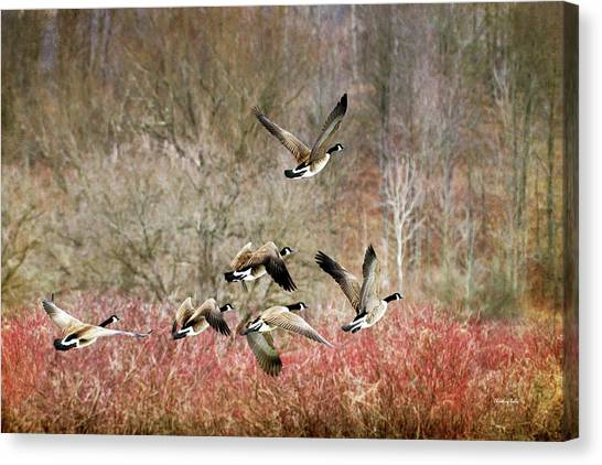 Canada Geese In Flight Canvas Print
