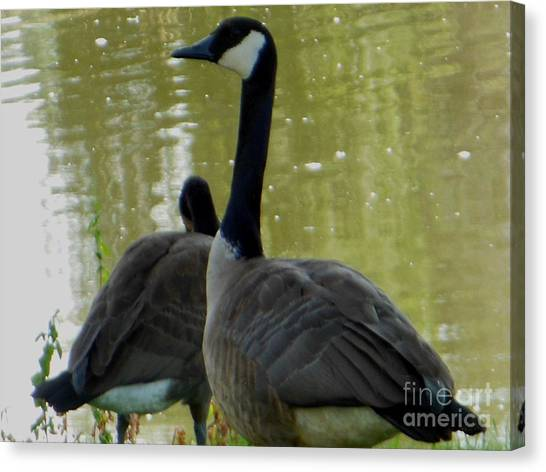 Canada Goose Edge Of Pond Canvas Print
