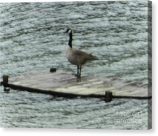 Canada Goose Lake Dock Canvas Print