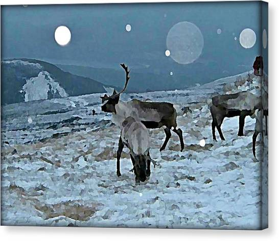 Canvas Print - Canadian Elk By Moonlight by Raven Hannah