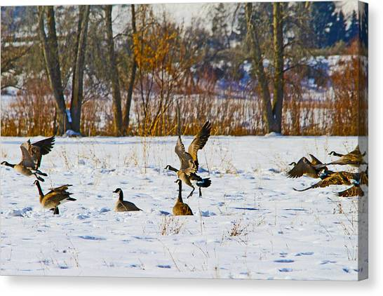 Canadian Geese At Sunrise IIi Canvas Print