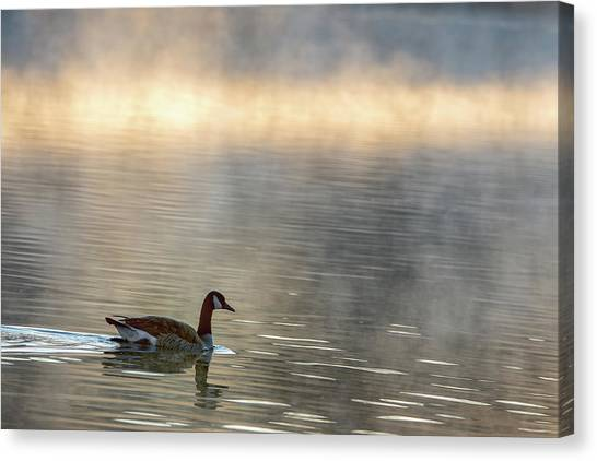 Canadian Goose In Misty Lake Canvas Print