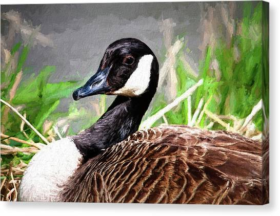 Goose Canvas Print - Canadian Goose by Tom Mc Nemar