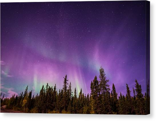 Canadian Northern Lights Canvas Print