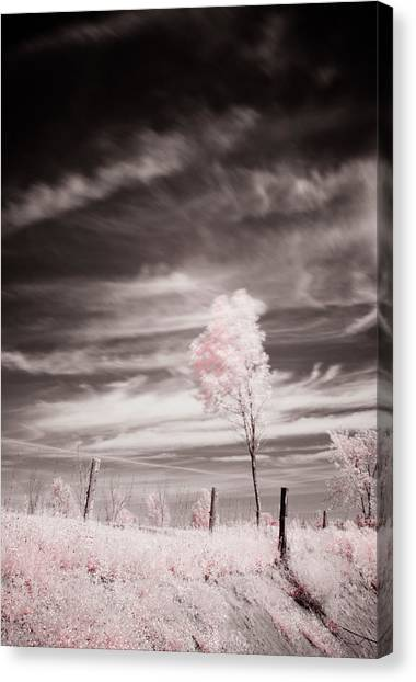 Candy Cotton Dream Canvas Print by Lea Seguin