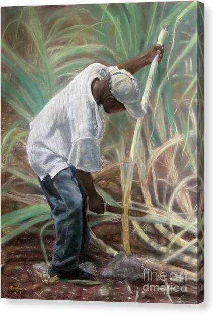 Cane Field Canvas Print