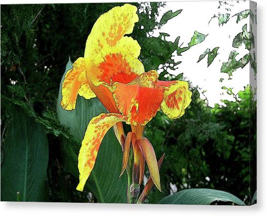 Canna 3 Canvas Print by Padamvir Singh