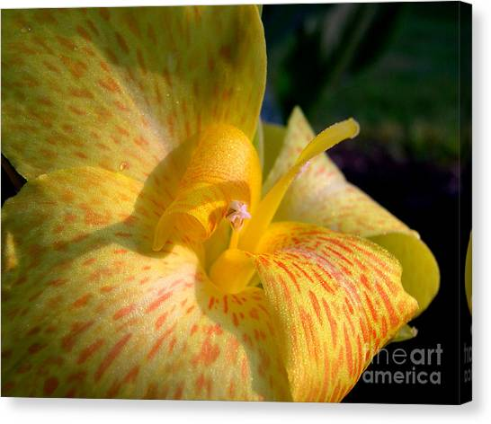 Canna Canvas Print by Addie Hocynec