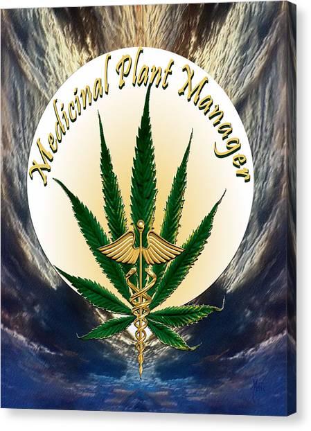 Cannabis Medicinal Plant Canvas Print