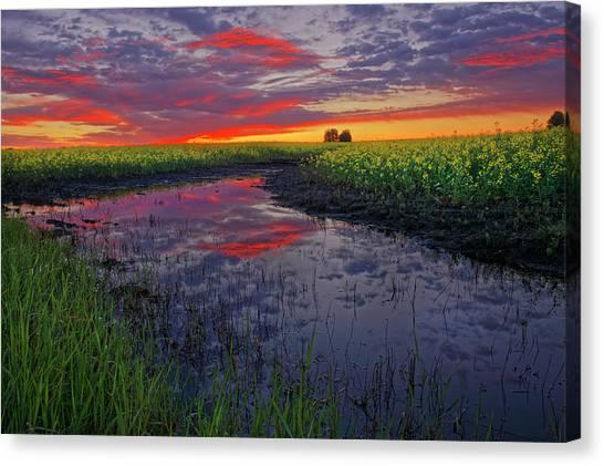 Canola At Dawn Canvas Print