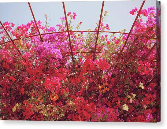 Arbor Canvas Print - Canopy Of Color- Photography By Linda Woods by Linda Woods