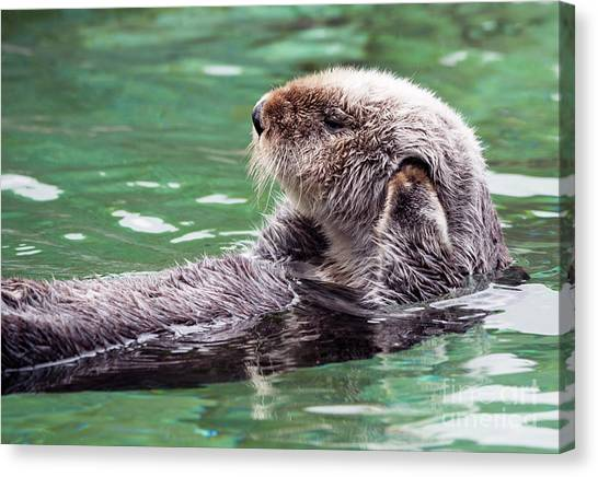 Otters Canvas Print - Can't Hear You by Mike Dawson