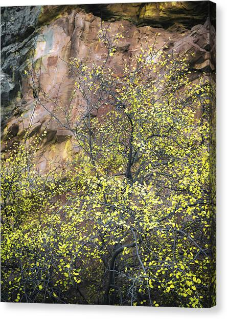 Capitol Reef Canvas Print - Canyon Cottonwood by Joseph Smith