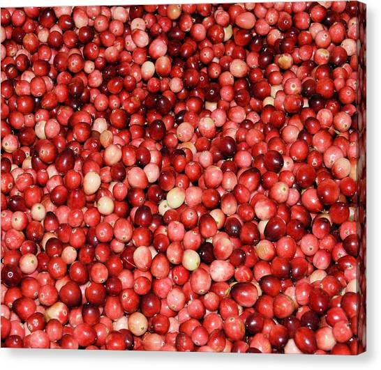 Cape Cod Cranberries Canvas Print