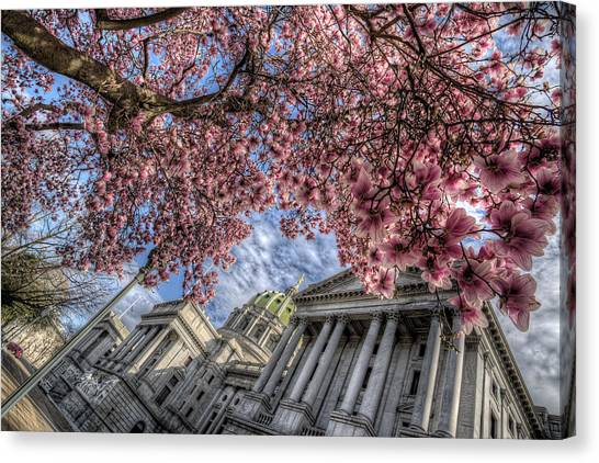 Capitol Blossoms Canvas Print