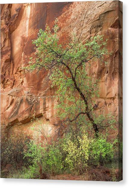 Capitol Reef Canvas Print - Capitol Gorge by Joseph Smith