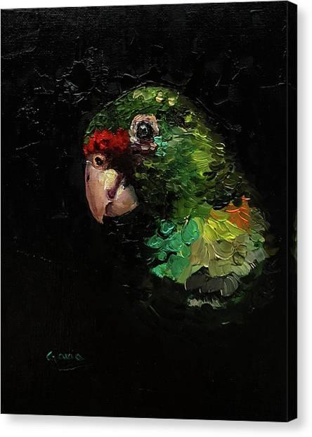 Captain The Parrot Canvas Print