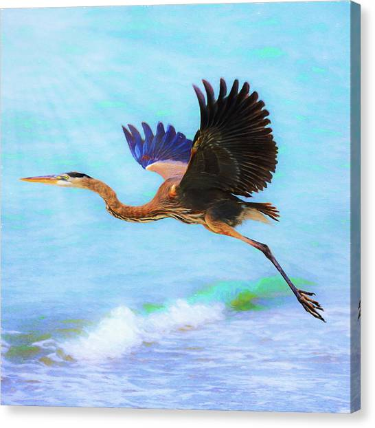 Captiva Crane In Flight Canvas Print