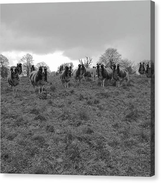 Warwickshire Canvas Print - Captive Audience. #captiveaudience by John S