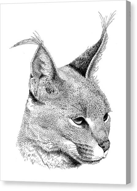 Caracal Canvas Print