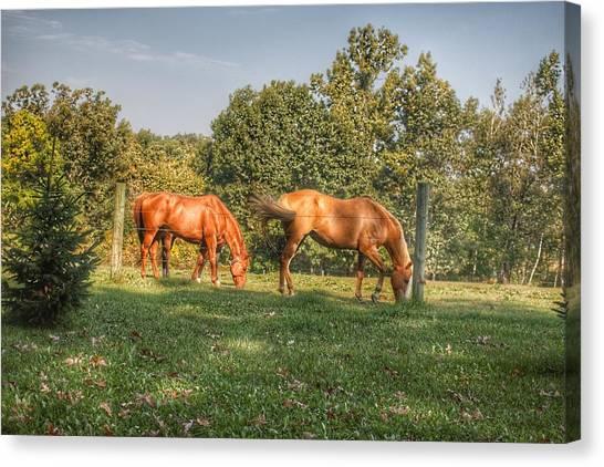 1006 - Caramel Horses I Canvas Print